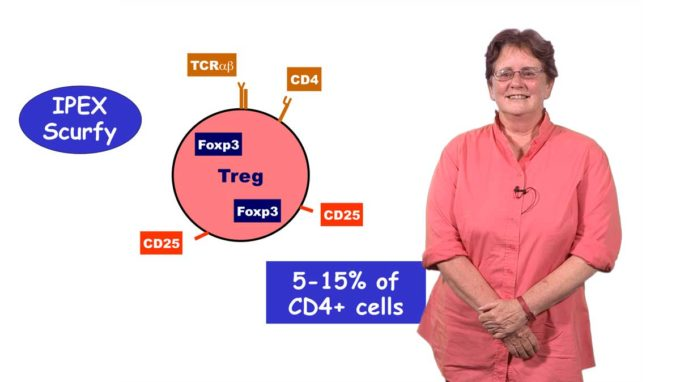 An Introduction to T Cell Tolerance